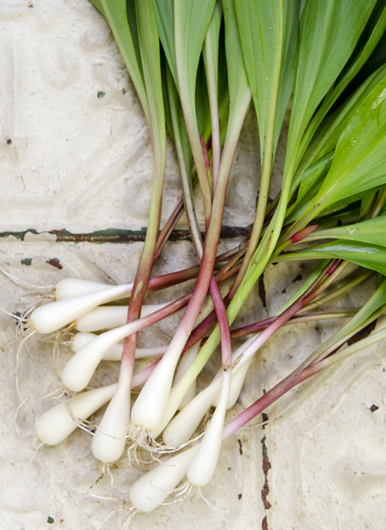 Wild Leek & Potato Soup | A Dash of Compassion